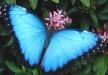 Afbeelding Vlinderparadijs Papiliorama