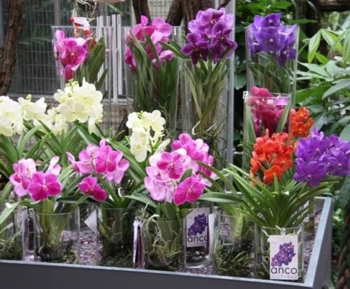 De Orchideeën Hoeve afbeelding